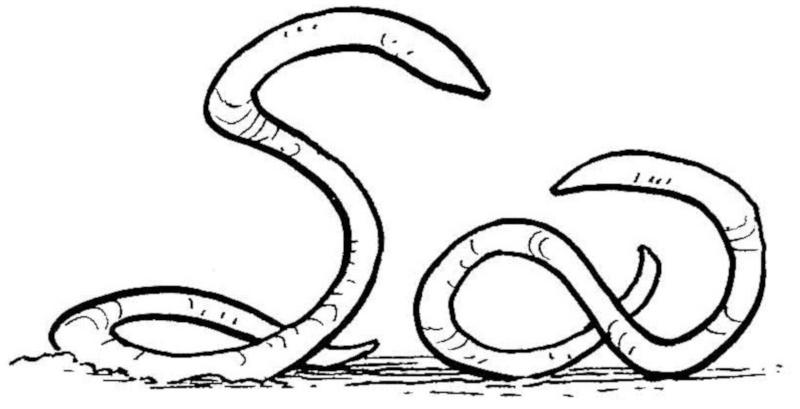 Vers blanc d'Ylesia