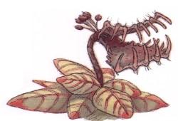 Piège-à-touke