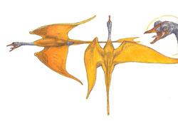 Oiseau-murmure