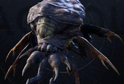 Araignée-fléau